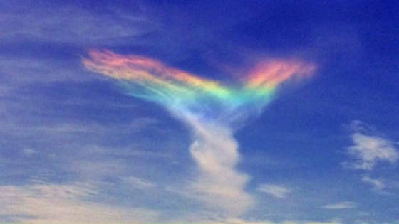 rainbow_wings.jpg